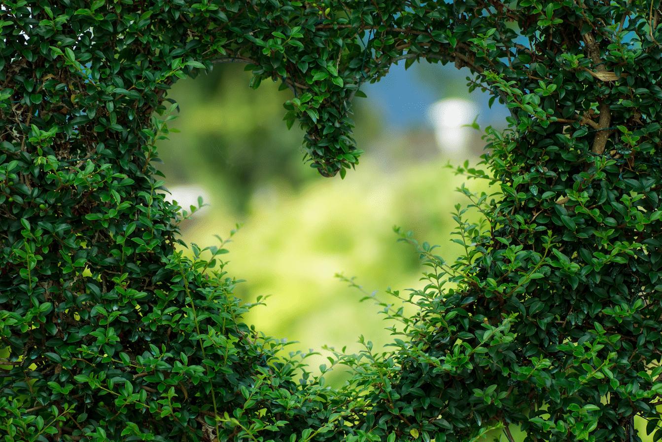 Een mooiere wereld begint bij je tuin